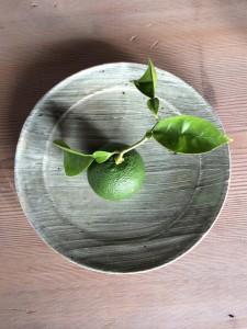 【2014出展作家: 陶磁 】 森山陶器